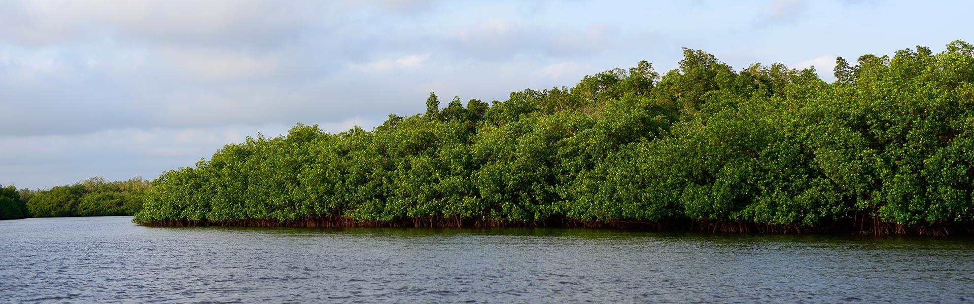 parque nacional orangoportada2