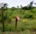Cercado-electrico_P-N-Orango_Poilao_Bijagos_Guinea-Bissau0005-500x333