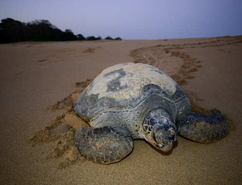 16th JUne, Celebrating Sea Turtle International Day